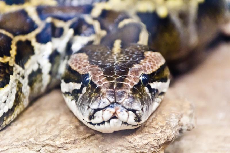 Python Classes Tutorial